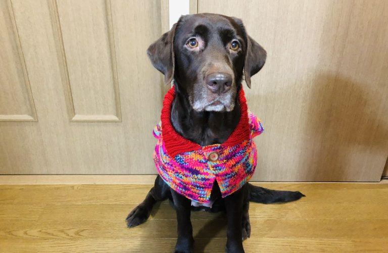 犬用の手編みケープ完成(『かわいい犬の手編み服』掲載作品)